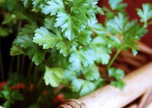 parsley-126155_960_720