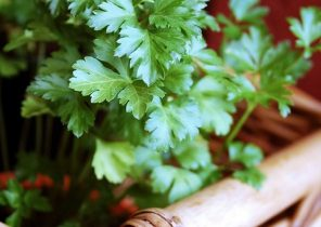 parsley-126155_960_720